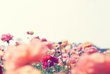 - Blomstrande -