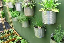 Grow Your Own Food / Vegetable, fruit and flower gardening ideas.