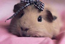adorable animals / by Janice Janiszewski