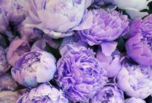 Floral. / by Asteria Ty