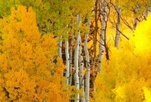 colors :: yellow jaune