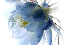 surface design :: florals :: photos