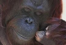 animal love / Tell me animals don't have emotions.