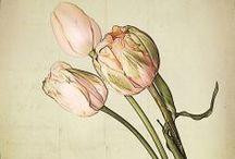surface design :: florals :: botanical illustration, realism