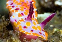 fauna :: aquatic