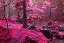 colors :: fuschia +
