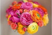 Orange and Pink Wedding Ideas / by Meg Q