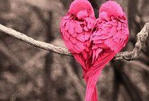 Birds / by Janice Janiszewski