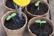 The Orchard: How Does Your Garden Grow: Shabby Chic Vintage / Growing plants/gardening - Find out how to grow plants and vegetables and generally make your garden beautiful.