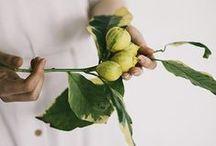 Green Thumb / Plants / gardens / balconies / gardening