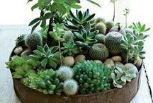 Succulents / by Karen Brien