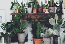 Domestic: Urban Jungle