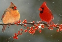 Birds  / by Andrea Low
