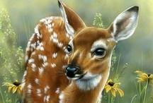 Animalia: Deer... / by Esperanza Wild