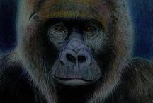 Animalia: Monkey... / by Esperanza Wild