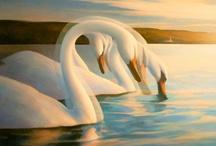 Animalia: Swan... / by Esperanza Wild