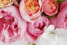 floral arrangements / by Amandita Designs