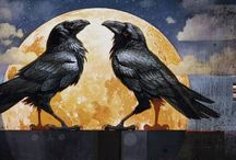 Just B-CAW's / Ravens Crows Blackbirds and their beauty