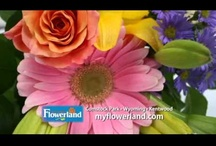Featured Videos / Flowerland now has a place for all their gardening videos! Check out our Youtube channel! https://www.youtube.com/user/myflowerland Best Garden Center Grand Rapids Michigan Myflowerland Flowers Flower Gardener Green Plants Plant Flowers Trees Shrubs Greenery