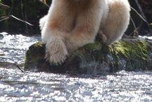 Bears -- soul animals