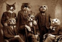Vintage Kitties / by nearly~normal~nancy