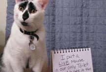 Pet shaming!