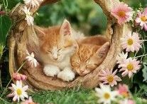 "Cats, Cats, Cats / ღ ""Cats are connoisseurs of comfort."" ღ  READ BEFORE PINNING! 1. Do not pin more than five pins at a time. 2. Pins MUST link to their original websites or recipes (check to make sure it's a legitimate site before you pin and DO NOT pin just a google or yahoo image) 3. Pins may not be ""uploaded by user"" unless they are your original content. 4. No advertisements, please. Please follow these rules so we can make this a truly wonderful community board."