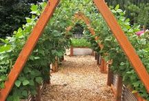 ✽ Arbours & Trellises / Perfect for climbing plants, providing shade, and most importantly, hanging hammocks - here are some wonderful arbours and trellises.