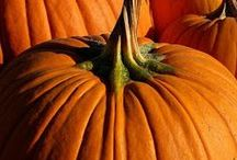 ✽ Pumpkins / All things pumpkin - growing, carving, eating, home decor, recipes. Heck, even planting them and using them as candles is fair game, as long as it's done with a pumpkin! Pumpkins may also invite their squash friends along. / by Stephanie @ Garden Therapy