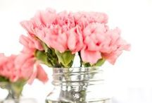 Carnation Ideas