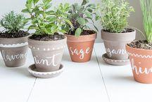 Garden & plants / by Josefa Galindo