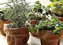 ✽ Herb Garden / Growing herbs. Harvesting herbs. Preserving Herbs. All of that plus culinary, medicinal, and natural beauty ideas. And lavender. Lots of lavender.