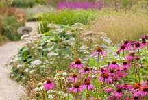 ✽ Water Wise Gardening / Collecting rainwater, drought-tolerant gardening, xeriscaping and more ways to garden with less water, wisely.