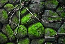 ✽ Moss / Moss is a beautiful ground cover, gorgeous natural art, and full of life. Let's celebrate moss!
