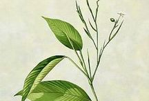 ✽ Natural Healing / Herbal remedies, tinctures, salves, and teas. Nature is powerful.