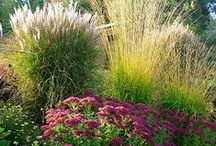 Xeriscaping / Backyard / by Annie Hedgpeth