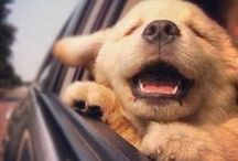 """Cuteness! / Animals that just make you want to say """"awww"""" / by Leticia B"""