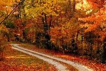 Autumn / My favourite season is Autumn, so why not make a board dedicated to it? / by Leticia B