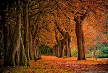 My Perfect Autumn