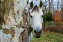Horses / by Marty Myatt