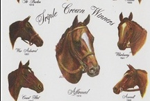 Famous Horses / by Emily Williams