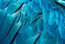 Colour: Blue / Azure, Aqua, Cerulean, Cobalt, Cornflower, Cyan, Sky, Iris, Midnight, Navy, Periwinkle, Persian, Powder, Royal, Sapphire, Steal, Ultramarine, Teal, Turqoise