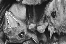 Critters / Bats