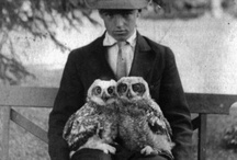 Critters / Owls