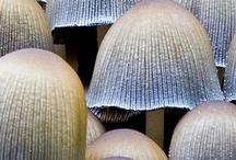 Nature / Shrooms / by Jesska Jones