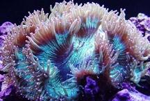 Nature / Corals / by Jesska Jones