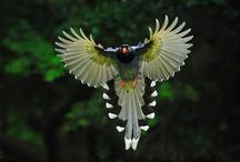 Birds / by Robert Couturier