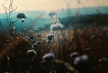 Nature / Flowers + Plants / by Jesska Jones
