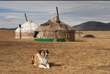 Places / Mongolia