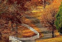 Fall / by Kirstin Grey